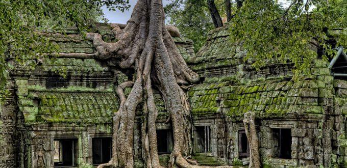 Cambodia Angkor roots
