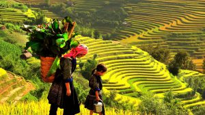 AccessibleAsia makes Asia Easy: VN Northern terraced rice fields